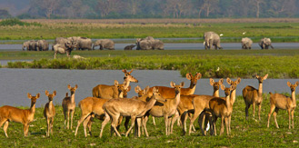 North East Wildlife and Cultural Tour